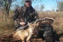 coyote-turkey